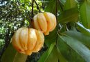 What Are The Benefits Of Garcinia Cambogia?